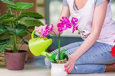 Hnojivo z banánové slupky přinutí orchideje, aby znovu vykvetly: Těšte se na záplavu pestrobarevných květů | JenŽeny.cz