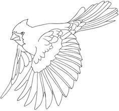 BIRD coloring pages 81 free birds coloring pages birds