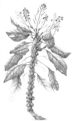 """A Garden of Marvels"" graphite illustrations sample on Behance"