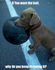 Why do you keep throwing? #dogmemes #funnydogs  http://www.nojigoji.com.au/