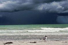 Facebook find of Sanibel Island, FL - Gorgeous!! ~Laur~