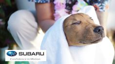 For all dog lovers!! Dogs Visit A Spa For The First Time // Presented By BuzzFeed & Subaru