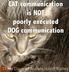 I've been considering that we don't impose the dog paradigm of communication, where tail wagging means 'I am happy or excited' and 'please give me more…' o…