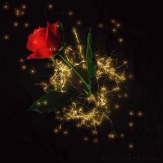Decent Image Scraps: Beautiful Roses 4