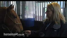 Horsemart - YouTube