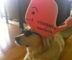 This might be a little too preppy but this will happen to my future dog lol
