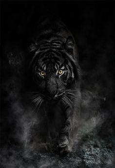 best ideas about Black wallpaper on Pinterest Black