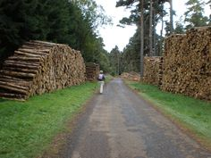 Recent activity of a woodcutting nature.
