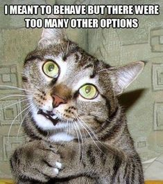 Well ya know, sometimes it's just more fun to be bad.. #funny cats