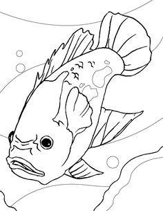 35 Coloring Pages Of Fish In The Ocean