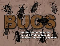 BEETLE VECTOR Clip Art Set INSECTS Digital Clipart .ai .eps .png Instant Download Bugs Graphic Design Elements Scrapbooking diy Crafts