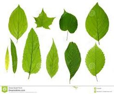 Image result for leaves