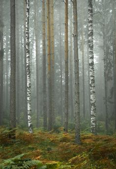 https://flic.kr/p/LJaZsi | trees