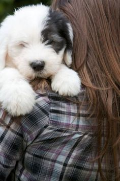 TOP 10 Best Dog Breeds For A Family With Kids – Old English Sheepdog