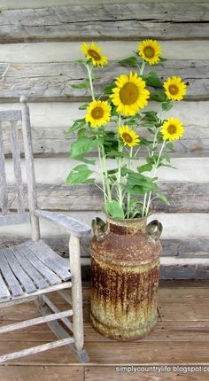 Simply Country Life: fresh picked sunflowers from the garden in an old milk can on our log cabin porch
