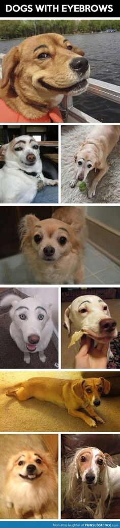 Dogs with eyebrows . I wish my dog wasn't black, I would so do this.