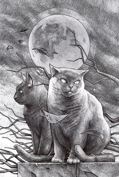 cat and cat by DanielGrzeszkiewicz.deviantart.com