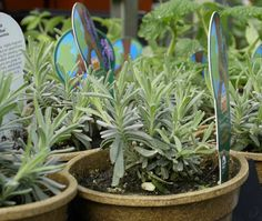 How To Choose Plants Wisely at the Nursery