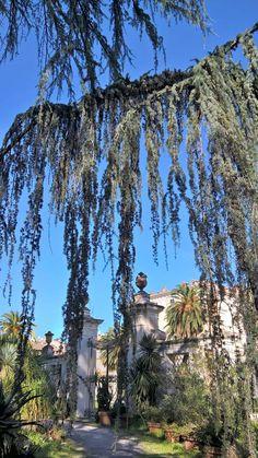 Foto di Simone Hahner. Orto botanico,dietro Palazzo Corsini.