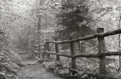 http://www.etsy.com/listing/59696696/black-and-white-photography-landscape