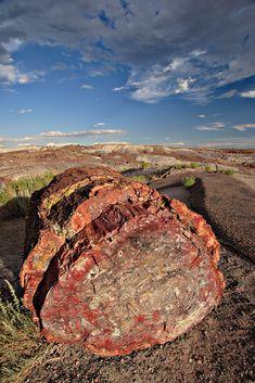 A petrified tree log in Petrified Forest National Park, Arizona, U.S.A.