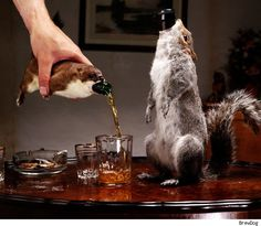 drunk new years squirrel   It's the World's Strongest, Most Expensive Beer -- Inside a Squirrel
