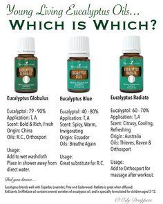 3 various Eucalyptus Essential Oil Young Living Young Essential Oils, Essential Oil Uses, Young Living Eucalyptus, Natural Asthma Remedies, Holistic Remedies, Living Essentials, Diffuser Recipes, Young Living Oils, Yl Oils