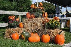 pumpkins with hay bales  mums