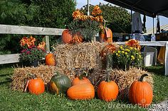 pumpkins with hay bales  mums