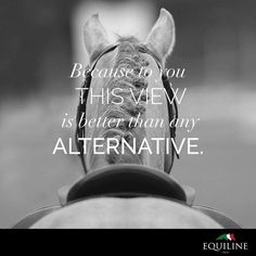 Art Of Equitation – Art Of Equitation Funny Horses, Cute Horses, Beautiful Horses, Equine Quotes, Equestrian Quotes, Equestrian Problems, Inspirational Horse Quotes, Horse Riding Quotes, Horse Girl Quotes