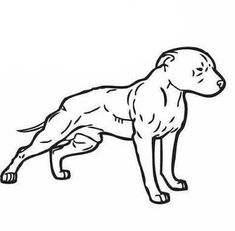 Pitbull Terrier, Game Bred Pitbulls, Dog Tattoos, Tattoo Drawings, Bulldog Mascot, American Pitbull, Dog Games, Dog Fighting, Big Dogs