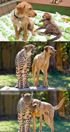 Animal Friendship Continues, best friends forever!