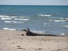 Beautiful Beach at the Pinery Provincial Park Beautiful Beaches, The Good Place, Outdoors, Spaces, Park, Nature, Animals, Outdoor, Animaux