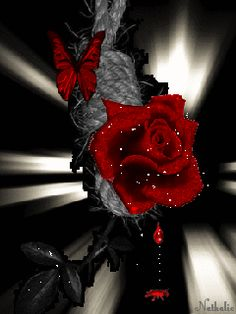 animated red | beautiful amazing animated blood red rose mobile wallpaper