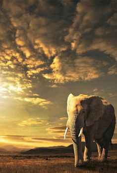 Elephant before an approaching storm.