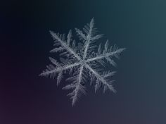 Amateur photographer Alexey Kljatov uses a simple Canon PowerShot to capture these pristine photos of snowflakes.
