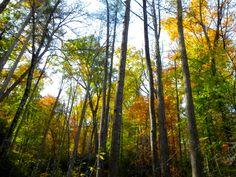 shooting upwards makes trees taller