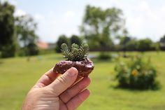 The hypertufa succulent gardener