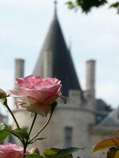 Rose sur fond de, set against the medieval 'Palais de Justice' on the Île de la Cité in Paris.