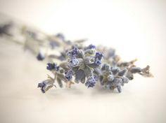 Lavender Salt Glow Bath or Shower Formula