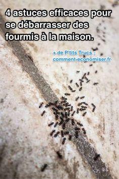 Vous êtes envahi par les fourmis à la maison ? Et vous cherchez des répulsifs efficaces pour les faire fuir ? Pas besoin d'acheter une bombe insecticide du commerce !  Découvrez l'astuce ici : http://www.comment-economiser.fr/4-anti-fourmis-simples-efficaces-pour-se-debarrasser-fourmis.html?utm_content=buffer2e2c6&utm_medium=social&utm_source=pinterest.com&utm_campaign=buffer