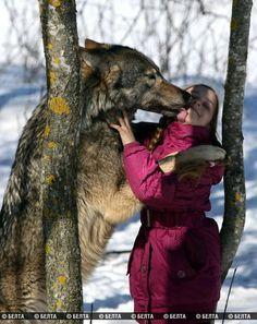 lupi domestici