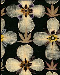 #plants #orchids #leaves #nature