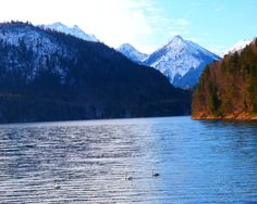 Alpsee - Jon Lander - © 2016 - a lake with swans in Hohenschwangau, Bavaria, Germany