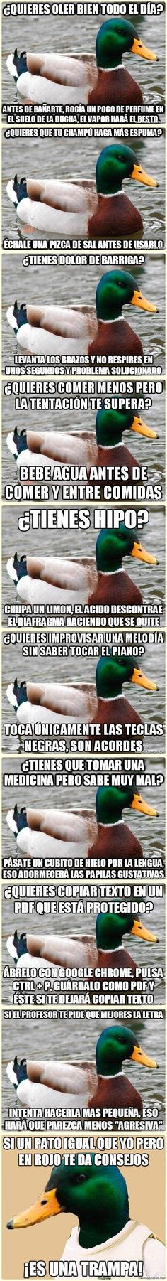 Pato consejero. Life Hacks, Things To Know, Good Things, Curious Facts, Internet, Fun Facts, Funny Quotes, Chiste Meme, Advice