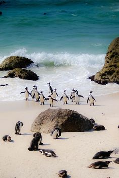 Visit Cape Town's picture-postcard beaches and dance to some tunes with your friendly and local Penguins of Boulders Beach. Visit South Africa, Cape Town South Africa, Places To Travel, Places To Visit, Africa Continent, Boulder Beach, Safari, All Nature, Chandigarh
