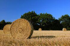 Harvest Straw Bales in Schleswig-Holstein - Cosecha - Wikipedia, la enciclopedia libre
