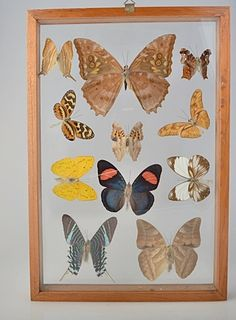 Beautiful Butterfly Collection. 11 Rare & Colorful by VSSoutlet