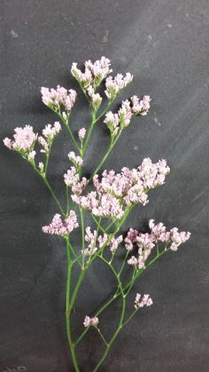 Limonium. I'm fine with a filler bouquet. I think they're simple and sweet