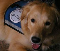 <3 We Love Our Clients <3  Wednesday morning at 8am on Kickin' It With Kenny (Fox 8) check out Daisy Norris, a Golden Retriever, recognized for her work with Ronald McDonald House Charities (RMHC) as a therapy dog! Congrats, Daisy!